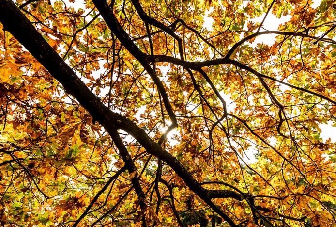 Sliedrecht wil graag van de inwoners weten waar de 900 nieuwe bomen in de gemeente moeten komen te staan.