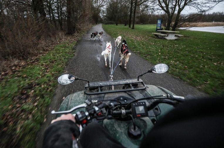Rob en Sandra Mossinkoff trainen hun husky's in Spaarnwoude Beeld Eva Plevier