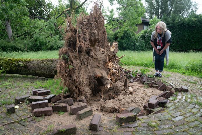 Een van de vele bomen aan de Zuideinde in Huissen die zijn omgewaaid.