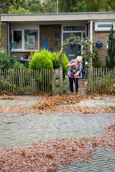 Erger je rot met bergen blad in je straat