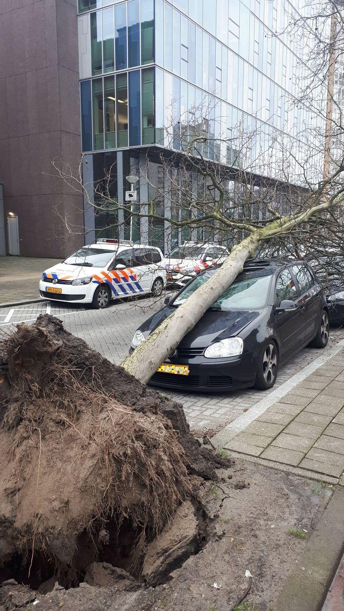 Zeker twee autobezitters beleefden een baaldag door de storm.
