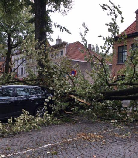 Omgewaaide boom beschadigt verschillende wagens op Walplein in Brugge: brandweer in de regio bereikt de kaap van 1.000 oproepen