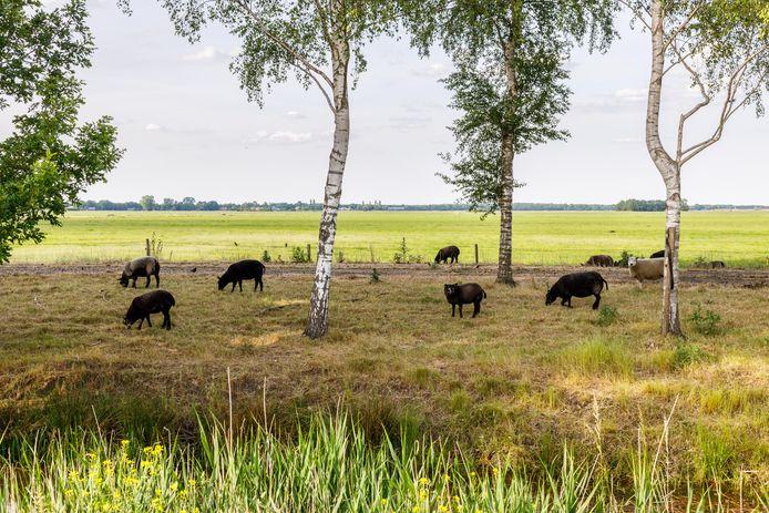 Het zonnepark in Eesveen moet komen bij de Eesveense Hooilanden.