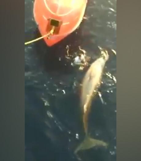 Man redt walvis uit visnet
