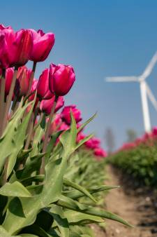 Stuur ons je mooiste foto's van tulpen in Flevoland!