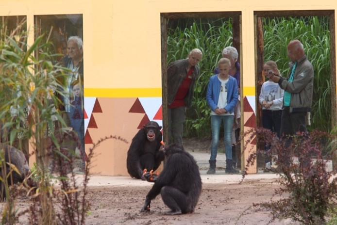 De apen in Dierenrijk voor het eerst buiten