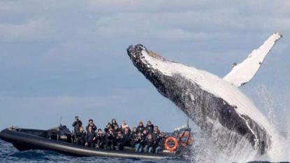 Spectaculair: open toeristenbootje wordt verrast door walvis in haven van Sydney