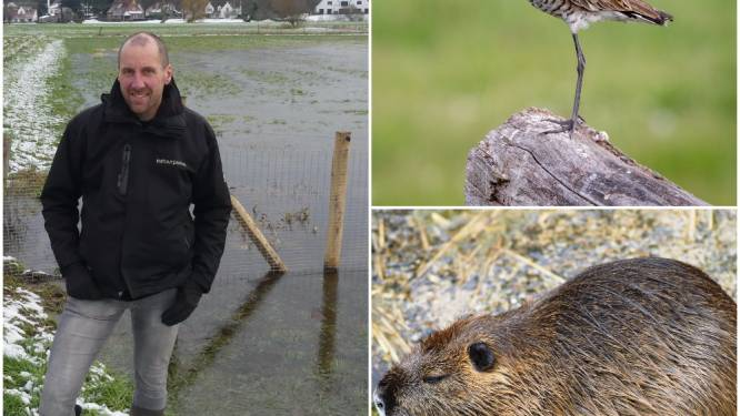 Hoe de bever en de grutto onze regio herontdekten: Natuurpunt Tussen Leie en Schelde werkt al tien jaar voor betere fauna en flora
