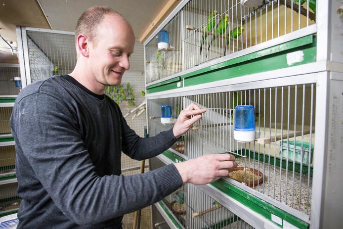 De Achterhoekse wereldkampioen vogelkweker Bas Reukers tussen zijn geliefde parkieten.