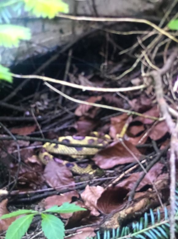 De dame toonde de brandweer een foto van de slang, om zo het dier terug te kunnen vinden.