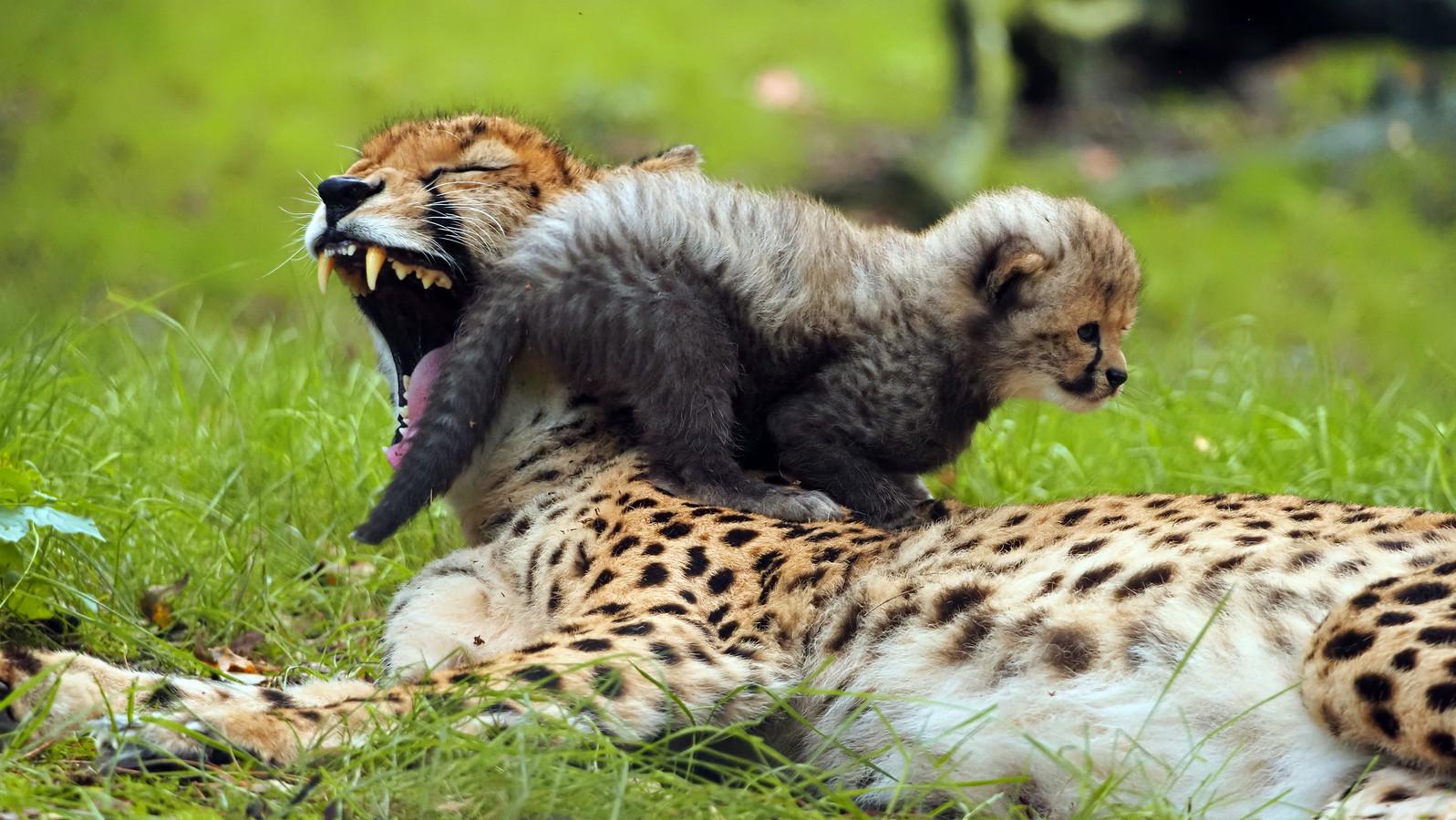 Moeder Kate speelt met een van haar jongen.
