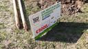 Lidl schonk 5 mille aan de nieuwe natuurzone, geld dat specifiek is om  bijen aan te trekken.