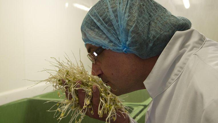 Een medewerker van Van der Plas in Langedijk ruikt aan taugé (2011) - deze persoon komt niet in dit verhaal voor. Beeld anp