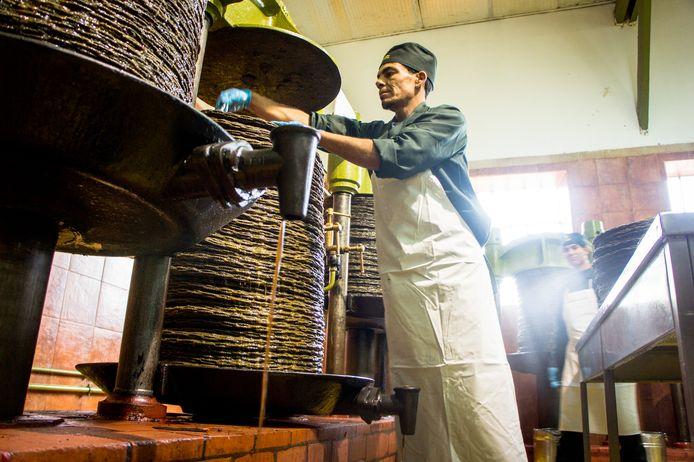 L'huile ruisselle le long des scourtins empilés et est recueillies dans des seaux.