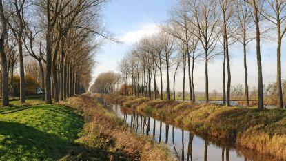 1.500 oude bomen verdwijnen langs Leopoldkanaal (maar er komen ook nieuwe)
