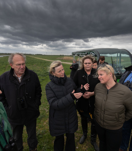 Oostvaardersplassen: de vlakten zijn weer groen, de lijkenlucht is verdwenen