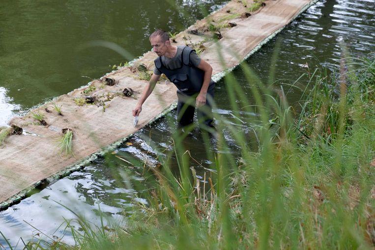 """De stad Ieper legt plantenmatten aan in de vestingen. """"Ze moeten het water zuiver houden."""""""