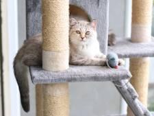 Is katten binnen houden überhaupt wel haalbaar? 'Ik kan ze dan maar beter laten inslapen'