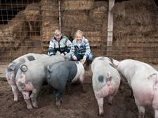 Toeval? Twentse actie voor beter dierenleven slaagt vlak voor 4 oktober
