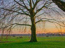 Die o zo mooie zonsondergang in Het Bossche Broek floreert niet