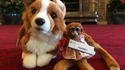 Verloren knuffel beleeft tijd van zijn leven in Buckingham Palace en keert terug naar huis met een vriendje