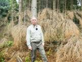 Massale bomensterfte in Enschede door droogte: 'We moeten vooruitdenken'