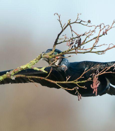 's Nachts vogels tellen in De Wieden: 'Zo hoor je de roerdomp en de kwartelkoning goed'