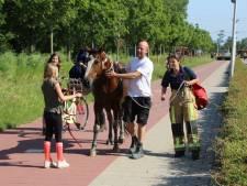Brandweer redt paard uit benarde situatie nabij sportpark Hoge Bomen Naaldwijk