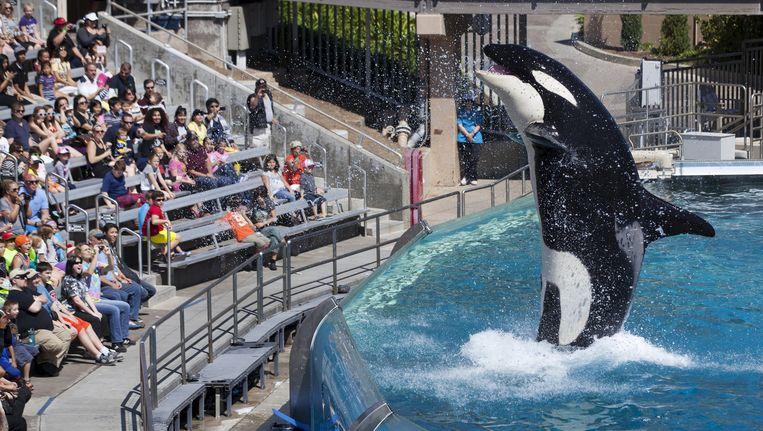 Een orka-show van SeaWorld. Beeld reuters