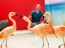 Veelbesproken flamingo's Intratuin Utrecht zijn gezond en gelukkig, zegt eigenaar: 'Het is makkelijk om er even snel iets negatiefs over te roepen'