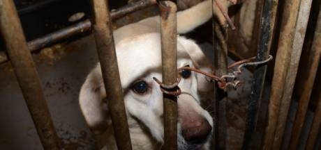 Eerste hond van omstreden fokker uit Lettele afgemaakt