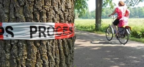 Processierups is in Oldenzaal en gaat er niet meer weg