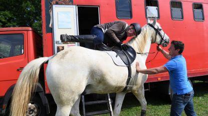 Jumping Wijgmaal ontvangt meer dan 300 ruiters