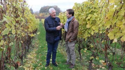 Moser op 'wijnbezoek' in Heuvelland