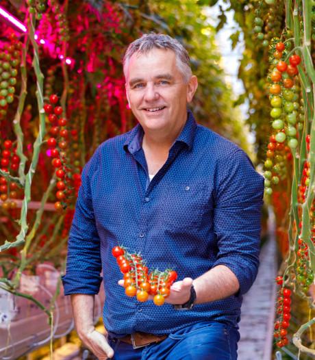 Geen tomaten uit Andalusië, maar gewoon uit Someren: tomatenlab heeft de toekomst