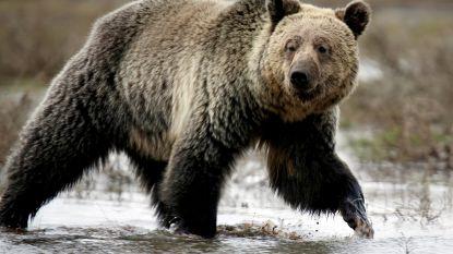 Jongen (17) slaat aanval van grizzlybeer af