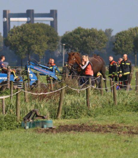 Paard uit water gered in Moordrecht