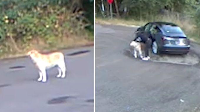 Vrouw gaat 'wandelen' met hond, maar laat hem dan gewoon achter