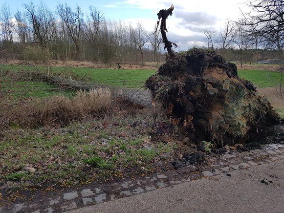 De Varendonksesteenweg in Herselt was uren afgesloten.