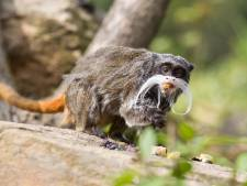 MicroMania, dierenpark met exotische beesten in Lochem gaat tóch niet door