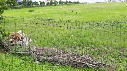 """Ook tweede deel Meulestedebos gerooid """"Boven aardgasleiding mag niks geplant worden"""""""