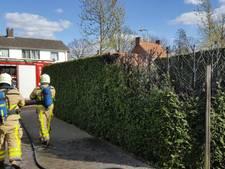 Coniferen vatten vlam aan Molenstraat in Dinxperlo