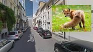 Vos ontdekt op derde verdieping van studentenhuis in hartje Brussel