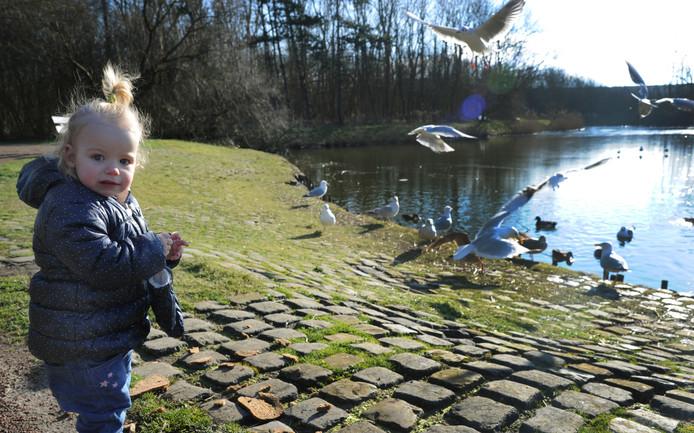 Vogels voeren in het Nollebos: komende maanden moet duidelijk worden of dat straks past in het streefbeeld voor het gebied.