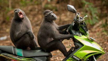 Dit zijn ze: de grappigste dierenfoto's van het afgelopen jaar