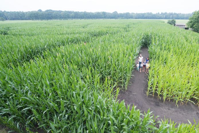 Het eerste maisdoolhof bij kinderboerderij Dondertman.