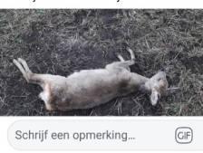 Loslopende honden jagen bij Enschede hertje de dood in: 'Dit raakt iedereen'