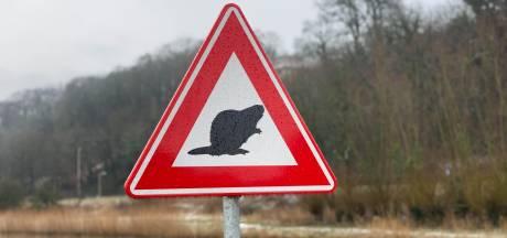 Bord dat waarschuwt voor overstekende bevers (of golfers of padden) illegaal: 'Ze bedenken maar wat'