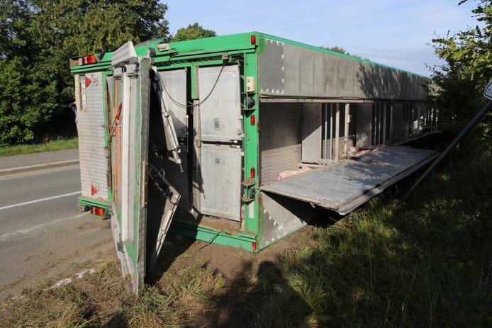 Bij het ongeluk zijn mogelijk varkens gewond geraakt of zelfs overleden.