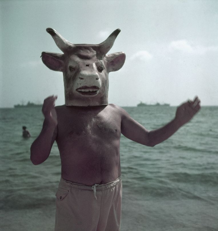 Portret van Pablo Picasso (1881 - 1973), Golfe-Juan, Vallauris, France, 1949.  Beeld The LIFE Picture Collection/Getty